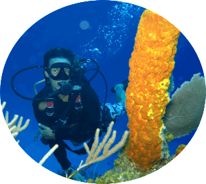 Gypsea Divers divecourses